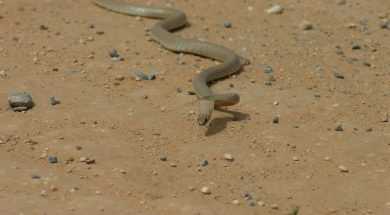 snake2-3
